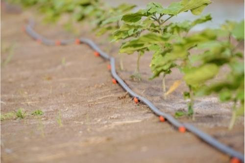 Може ли да се регулира и контролира поливането на растенията при система за капково напояване?